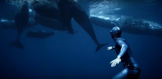 கடல் உலகம் (Sea World)