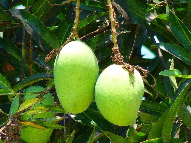 மாங்காய் சாதம்